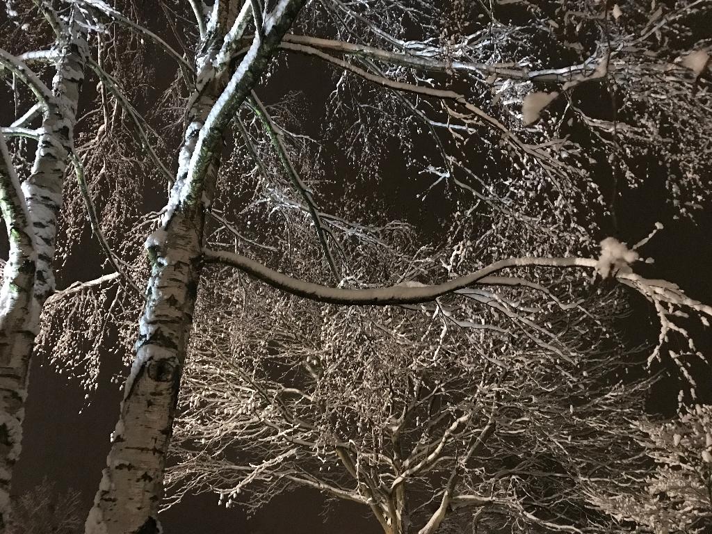 Allerkleinste Tannenbaum.Der Allerkleinste Tannenbaum Waldkindergarten Langenfeld
